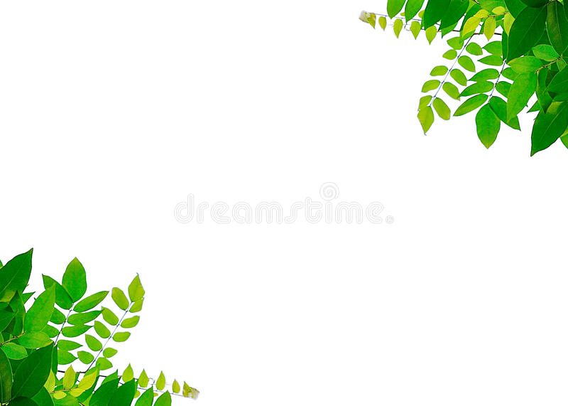 Листья закрывают вверх на предпосылке стоковые изображения rf
