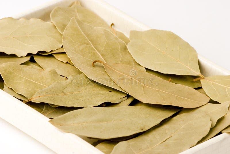 листья залива стоковые изображения