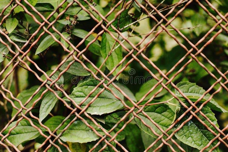 Листья за загородкой стоковая фотография
