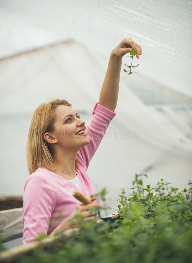 Листья зеленого цвета владением флориста счастливого флориста счастливые счастливый флорист в парнике счастливая женщина флориста стоковые фото
