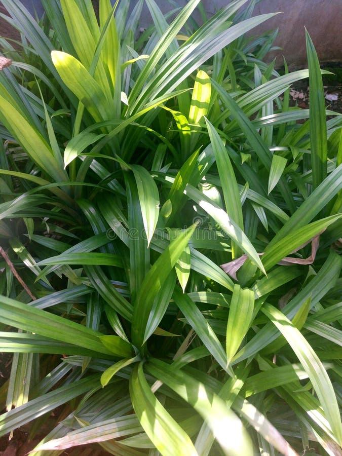 Листья зеленого цвета в предпосылке бака стоковая фотография rf
