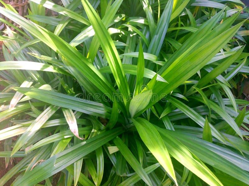 Листья зеленого цвета в предпосылке бака стоковое изображение