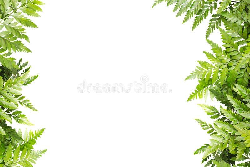 Листья зеленого цвета для рамки на белой предпосылке, границе природы стоковое изображение