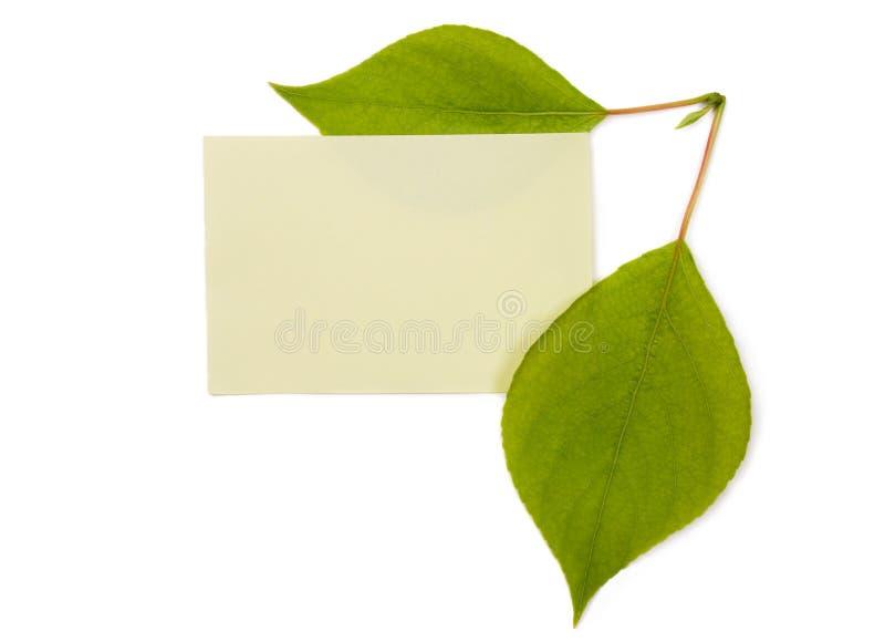 листья зеленого цвета знамени стоковая фотография rf