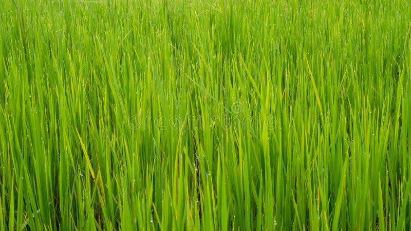 Листья зеленого цвета поля травы для предпосылки и текстуры стоковое фото