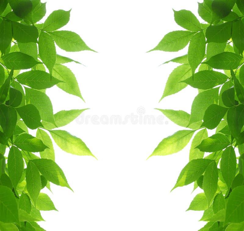 листья зеленого цвета рамки стоковая фотография