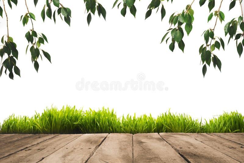 листья зеленого цвета, sward и деревянные планки стоковые изображения
