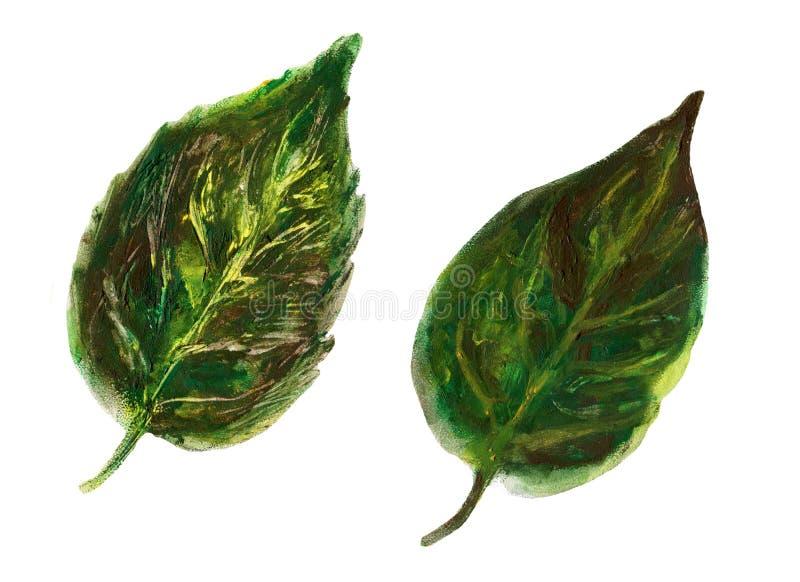 Листья зеленого цвета изолированные на белой предпосылке, иллюстрации акварели ботанической, руке нарисованный стиль, крася силуэ иллюстрация вектора