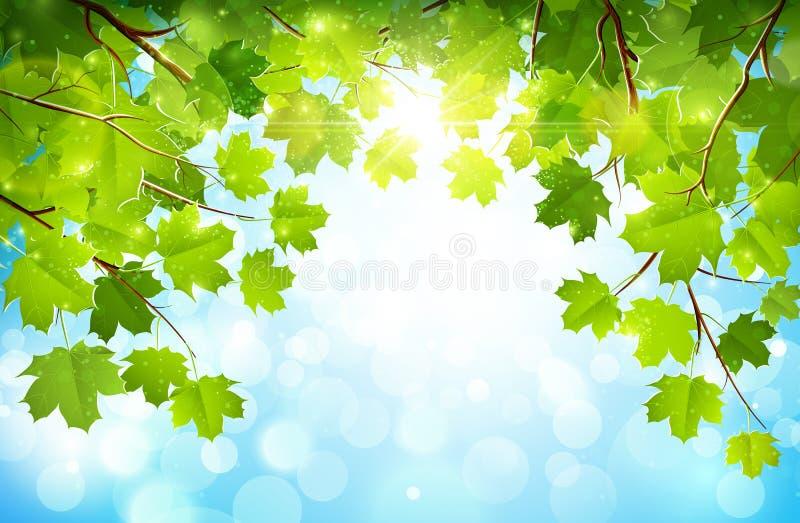 Листья зеленого цвета на ветвях иллюстрация вектора