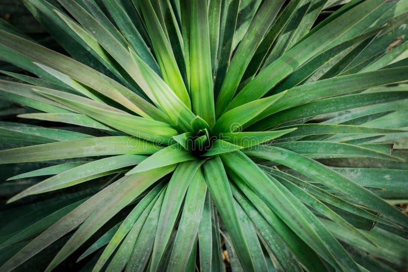 Листья зеленых заводов стоковое изображение rf
