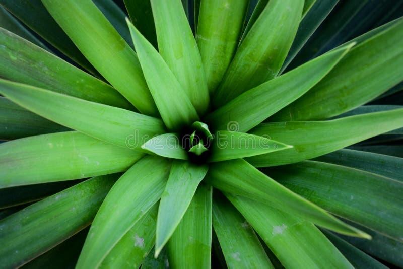 Листья зеленых заводов стоковая фотография rf