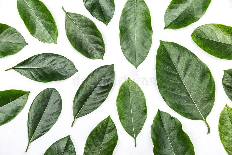 Листья изолированные на белой предпосылке, картине зеленого цвета выходят над белой предпосылкой стоковая фотография
