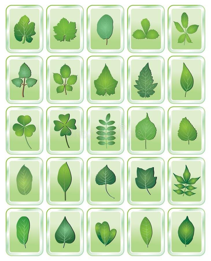 листья иконы