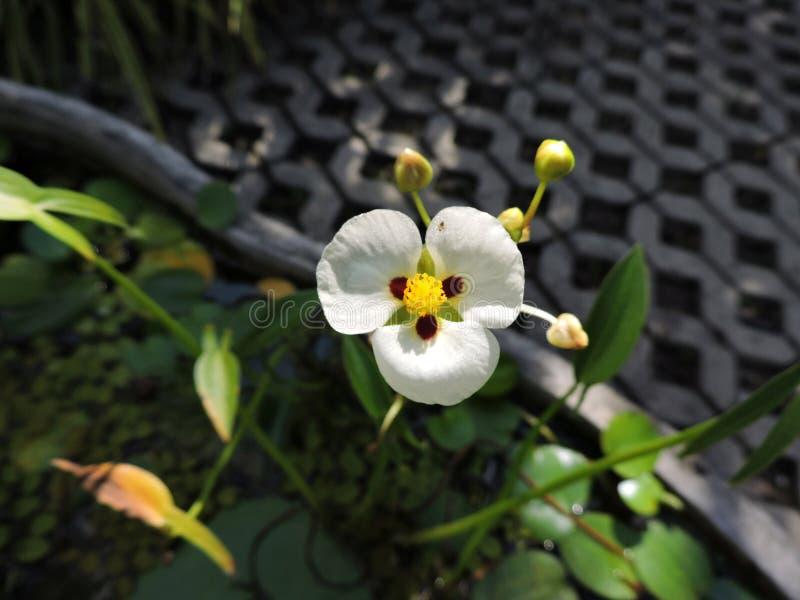 Листья лист цветков белого цветка зеленые стоковые фотографии rf