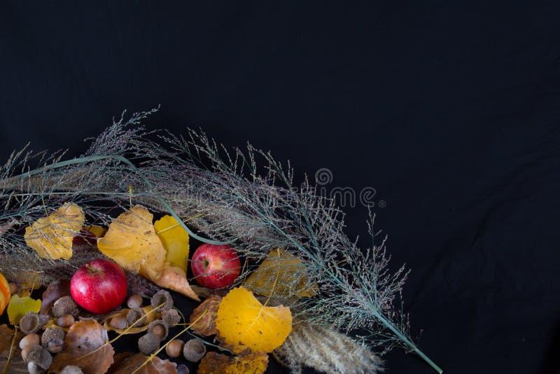 Листья и вереск яблок стоковое фото