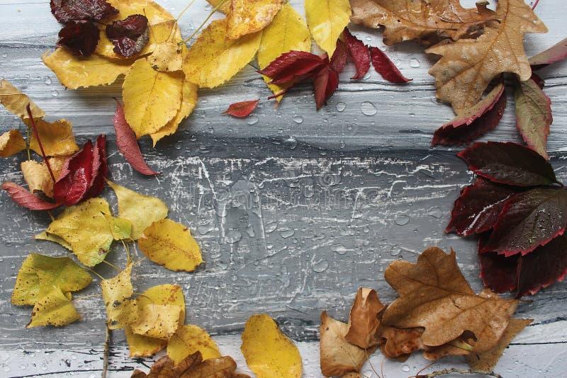 листья и дождевые капли осени на сером цвете стоковые фото