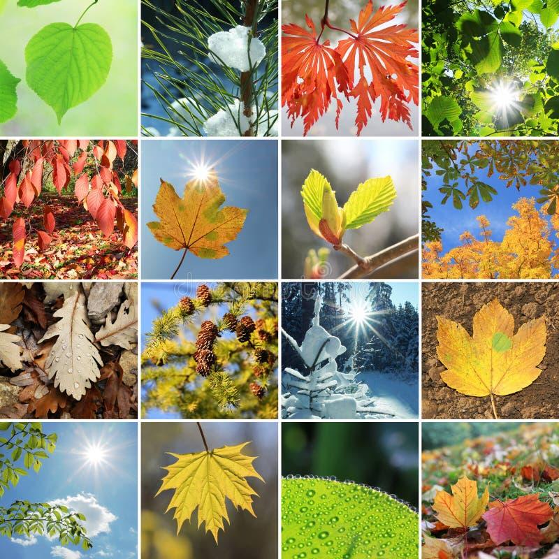 Листья и иглы в 4 сезонах стоковая фотография rf