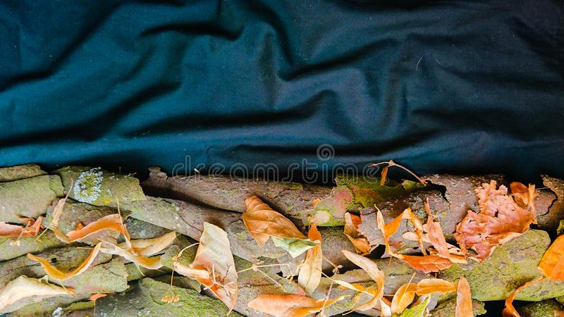 Листья и кора дерева предпосылки природы стоковые фотографии rf