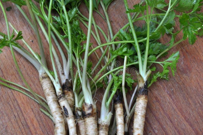 Листья и корни петрушки на доске кухни стоковые фотографии rf