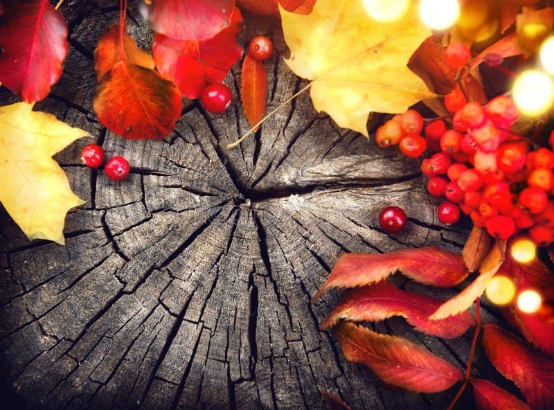 Листья и клюквы осени над треснутой древесиной стоковые изображения rf