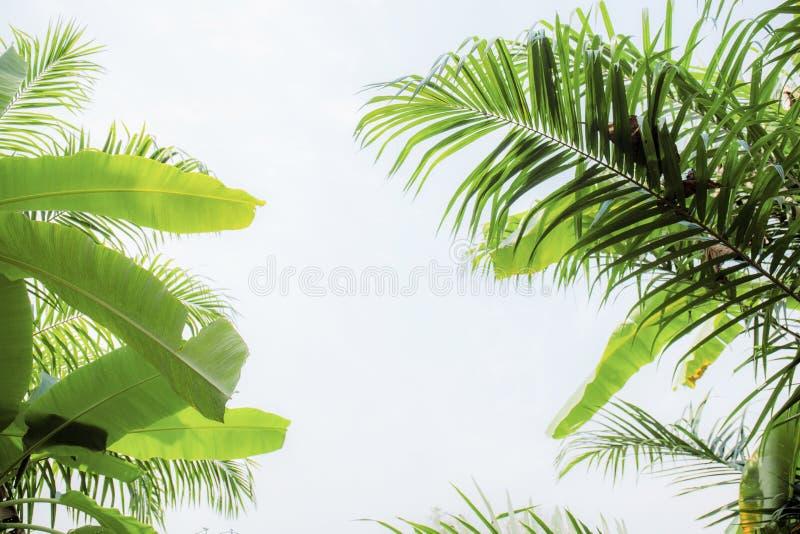 Листья и ладонь банана с небом стоковая фотография rf
