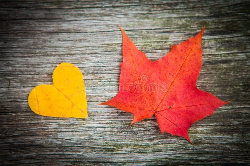 Листья и сердце осени стоковая фотография rf