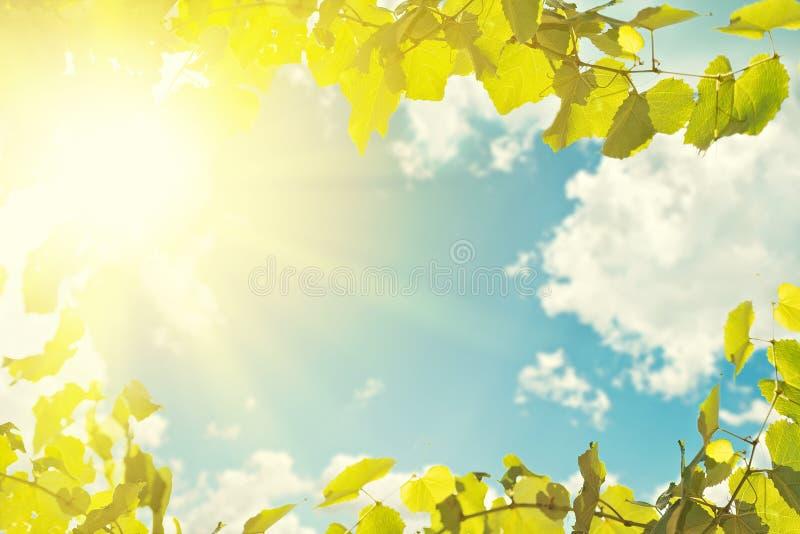 Листья и солнечный свет голубого неба стоковое фото rf