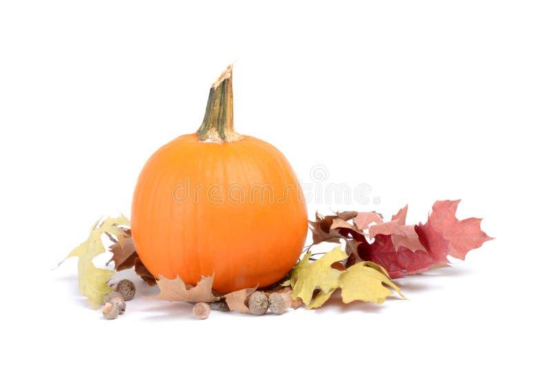 Листья и тыква стоковая фотография