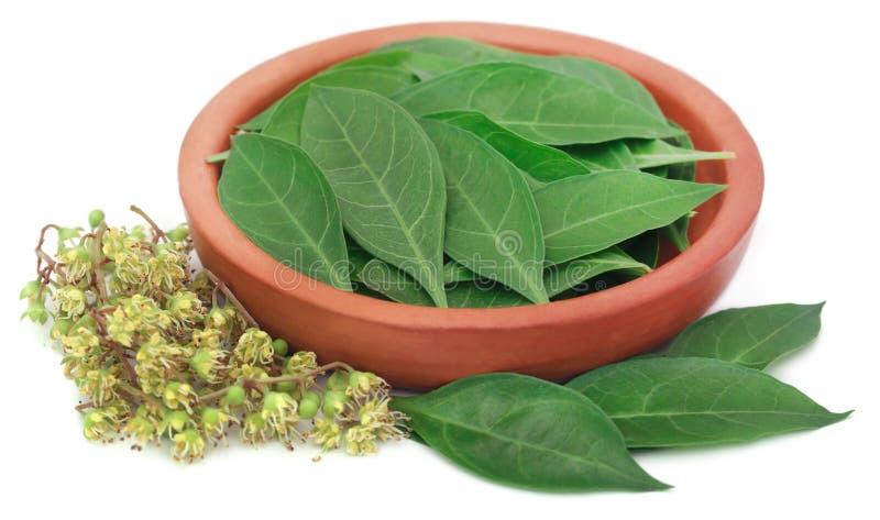 Листья и цветок хны Ayurvedic стоковое изображение