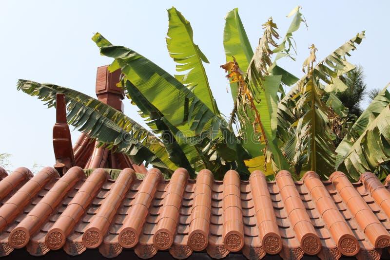 Листья кокосовой пальмы над крышей стоковые изображения rf