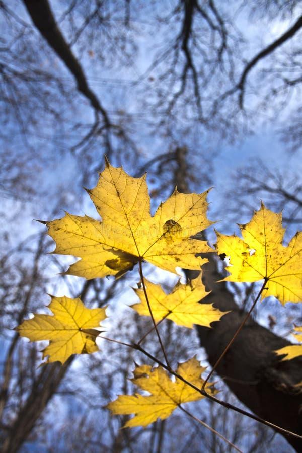 листья конспекта стоковое фото rf