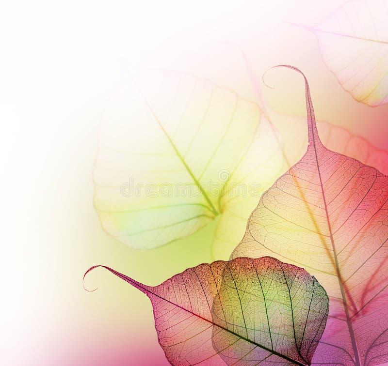 листья конструкции флористические иллюстрация вектора