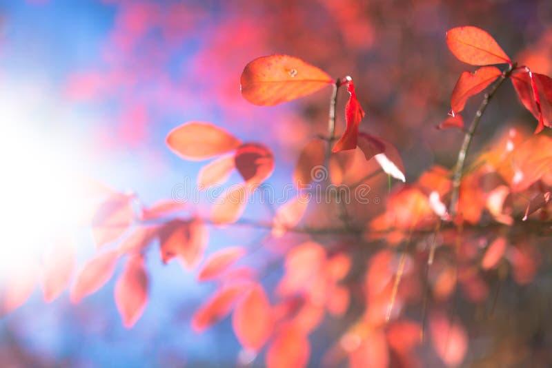 Листья красного цвета на голубом небе стоковое изображение rf