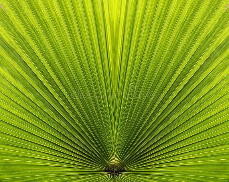 листья крупного плана выравнивают симметрию ладони стоковое изображение rf