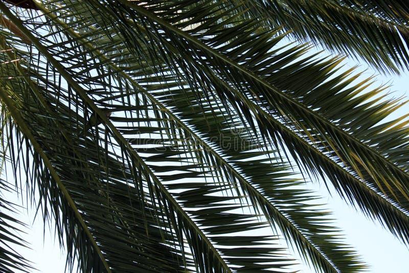 Листья ладони на предпосылке неба стоковое фото rf