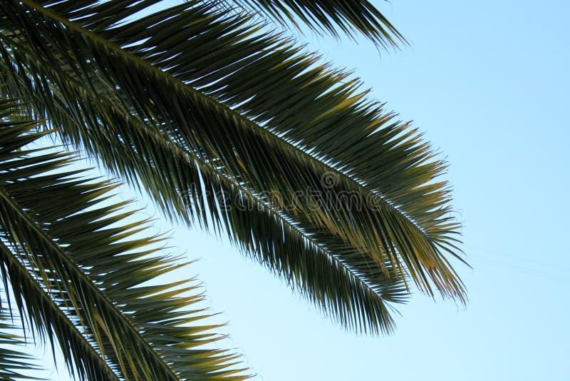 Листья ладони на предпосылке неба стоковые фотографии rf