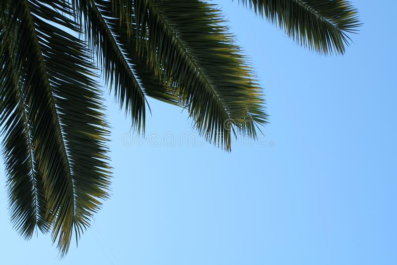 Листья ладони на предпосылке неба стоковая фотография rf