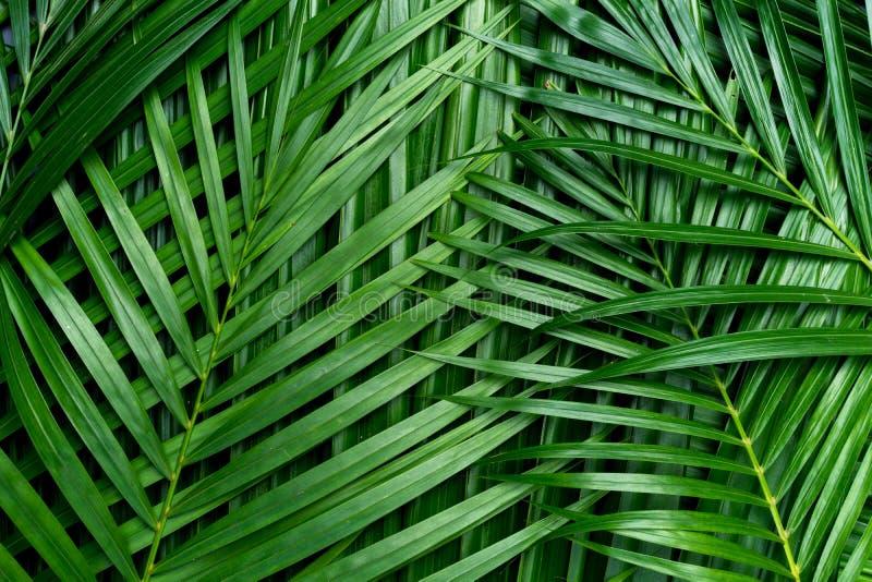 Листья ладони, предпосылка растительности стоковые изображения