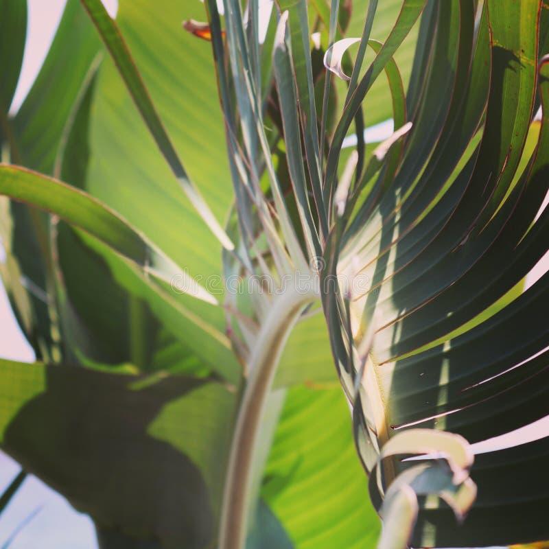 Листья ладони стоковое изображение