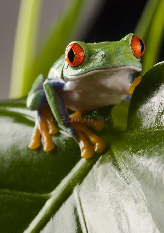 листья лягушки стоковое изображение