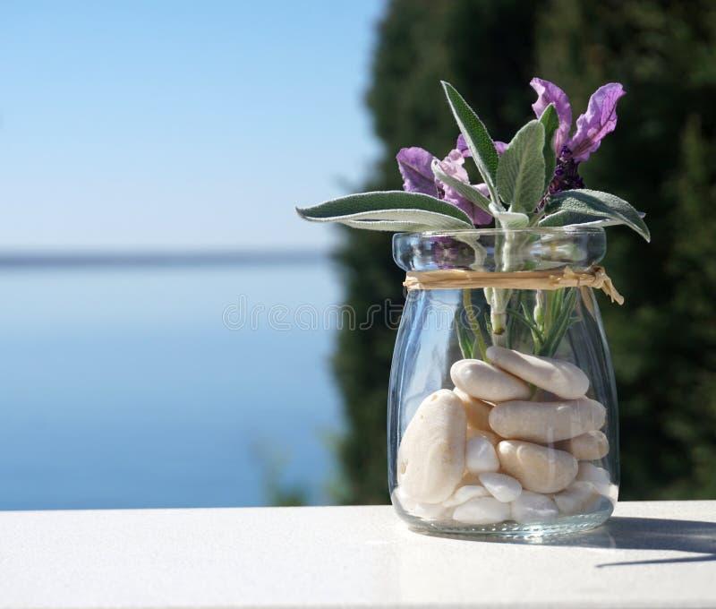 Листья молодых мудрых завода и цветков лаванды в маленьком опарнике с голубой предпосылкой моря и природы стоковое изображение rf
