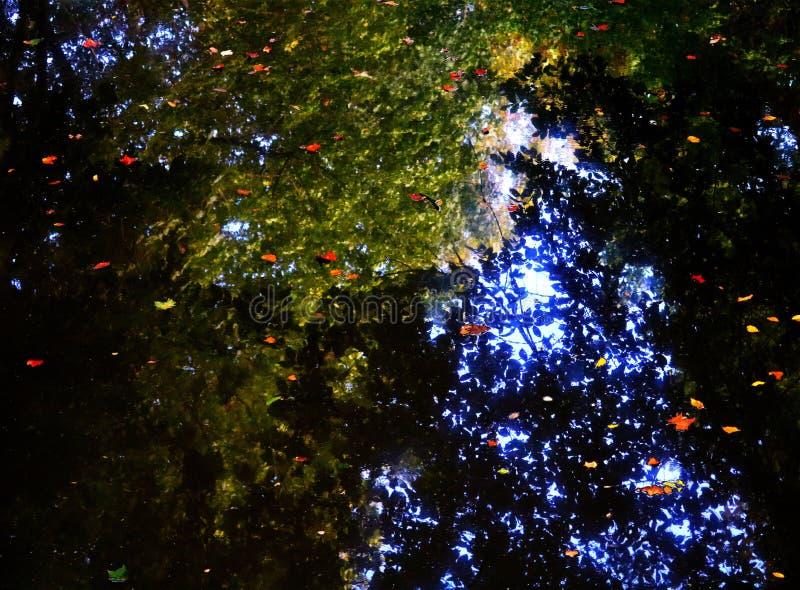 Листья на воде стоковое фото rf