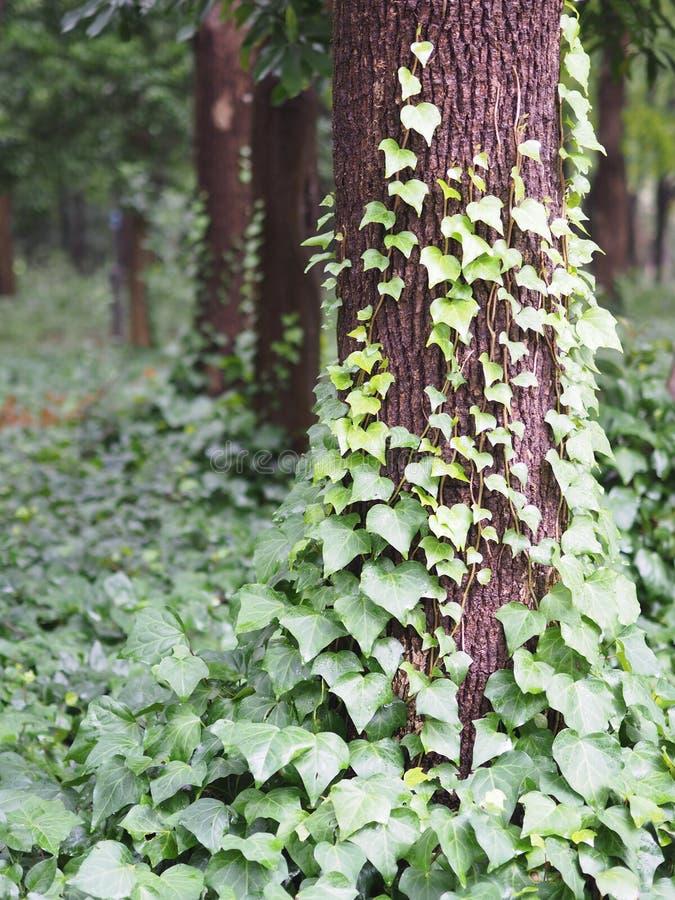 Листья на дереве, лесе, дневном времени стоковое фото rf