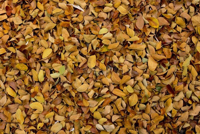 Листья на земле стоковая фотография