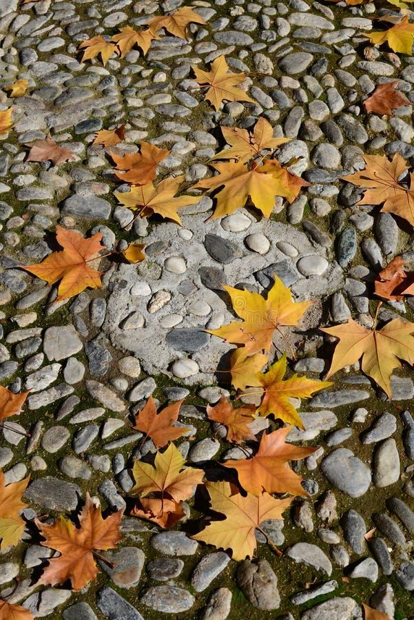 Листья на камешке стоковое изображение