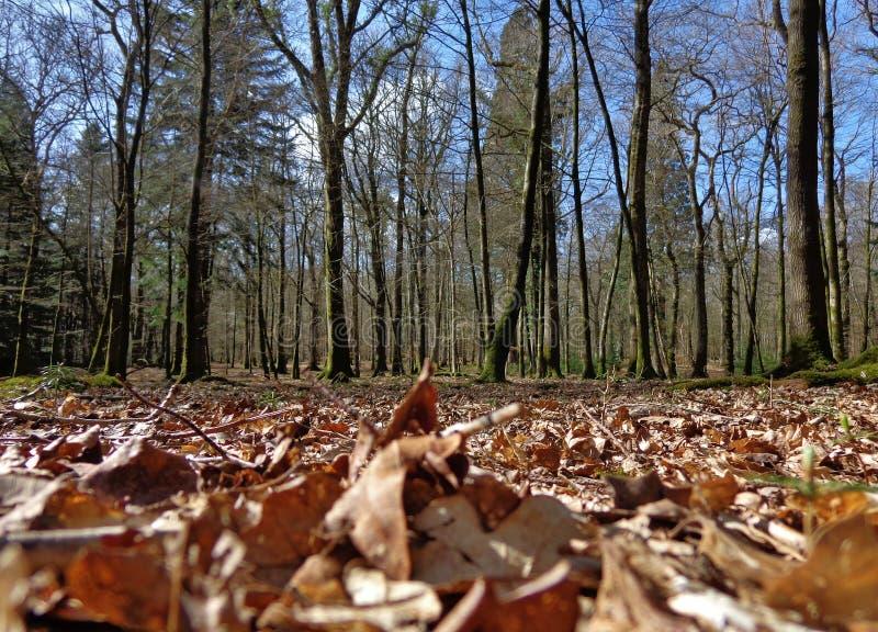 Листья на поле леса стоковое фото