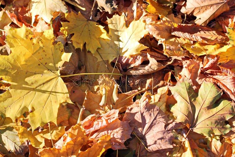 Листья на том основании в осени как предпосылка стоковое фото
