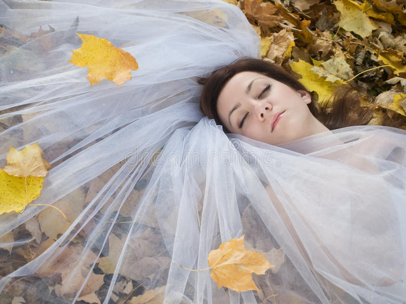 листья невесты стоковое изображение