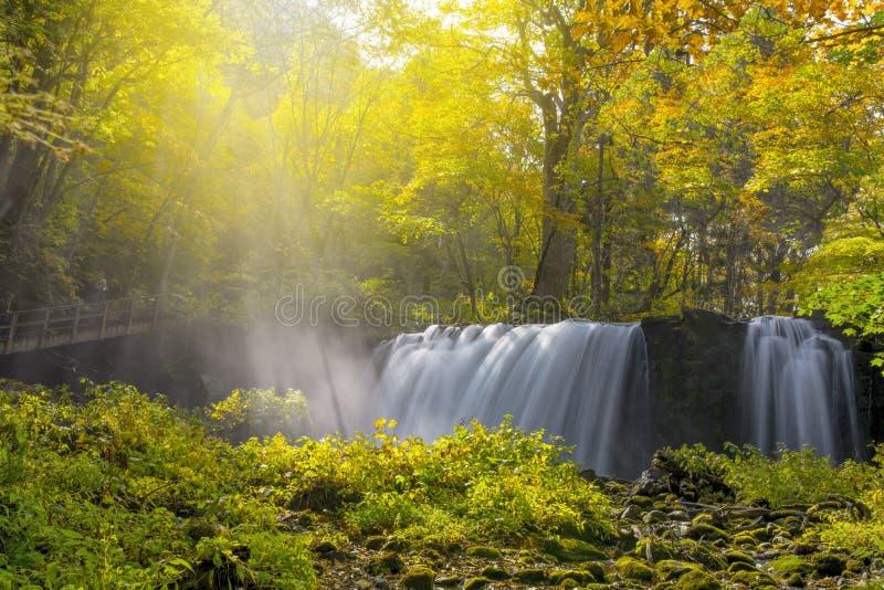 Листья осени водопада aomori в природе Японии стоковое изображение rf