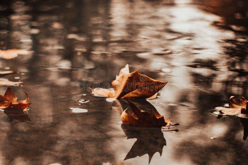 Листья осени в ландшафте осени стоковые фото